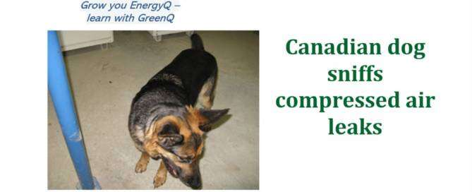 Cover to post Canadian dog sniffs compressed air leaks